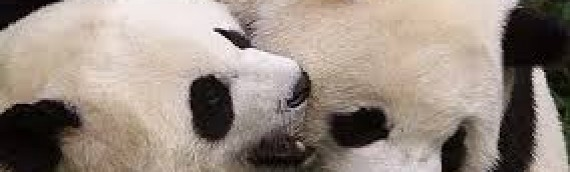 The Pandas, the Queen and Martin McGuinness